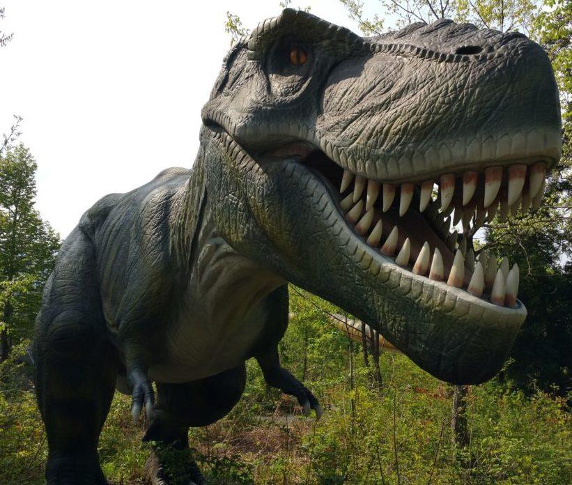 福井恐竜博物館より楽しい【勝山ディノパーク】でリアルな恐竜体験!